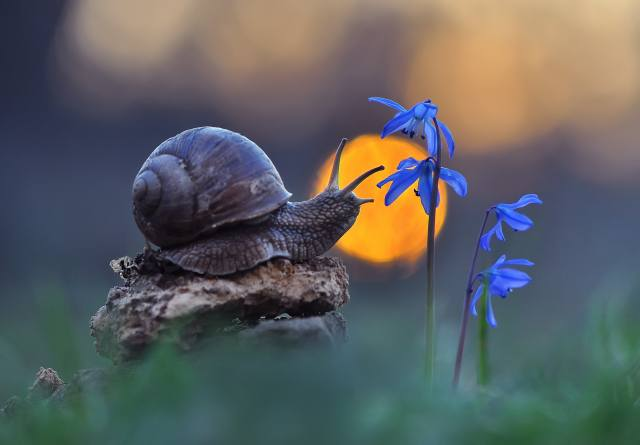 macro, flowers, nature, Snail, bokeh