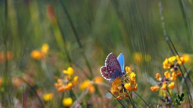 nature, summer, grass, flowers, butterfly