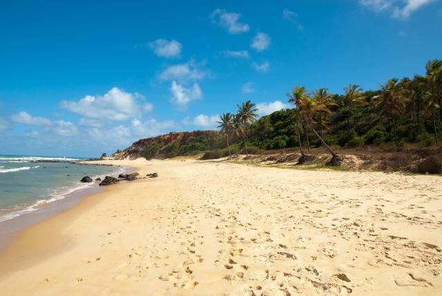 břeh, pláž, palmové