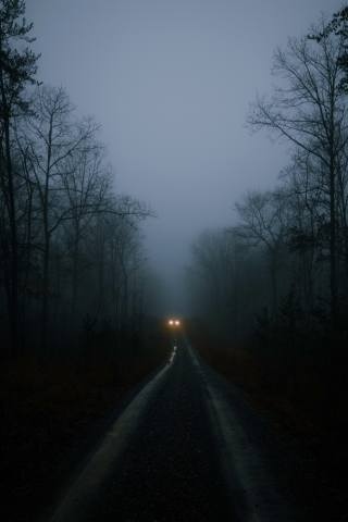 Auto, lights, road, forest