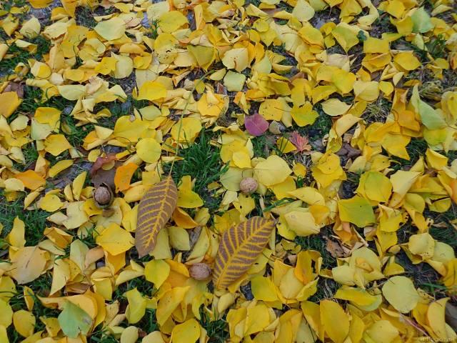 nuts, leaves, November