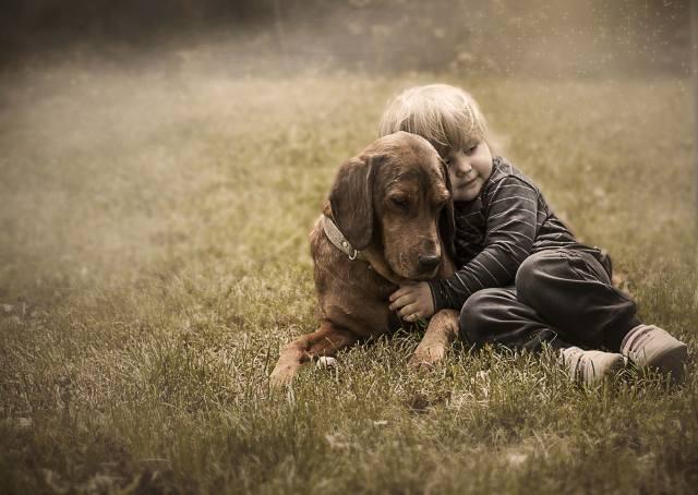 трава, собака, дети, ребёнок, мальчик, друзья