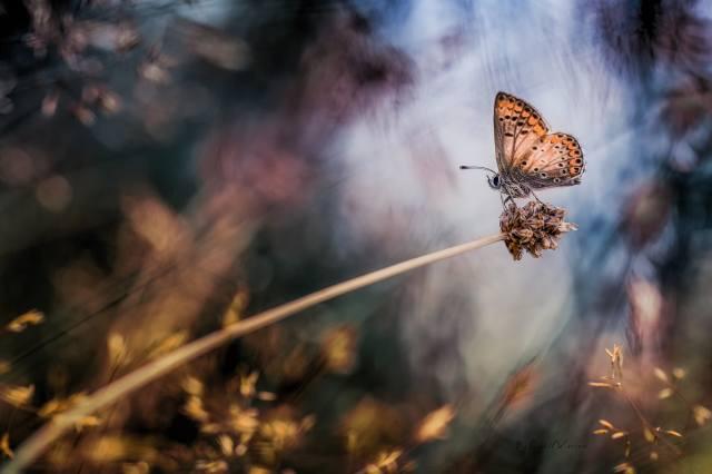 природа, макро, травинка, бабочка