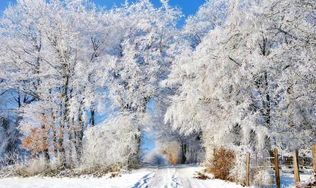 příroda, krajina, zima, sníh, stromy, KEŘE, jinovatka, cesta, plot