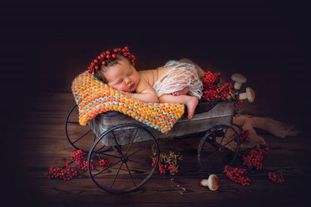 child, girl, baby, baby, sleep, truck, branches, berries, Rowan