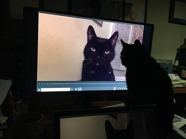 кішка, камера, монітор