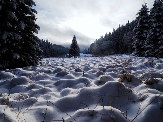 сніг, дерева, ліс, поле, зима, хмари