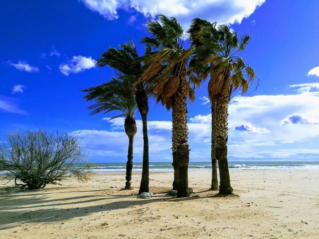 the sky, the ocean, the beach, palm trees