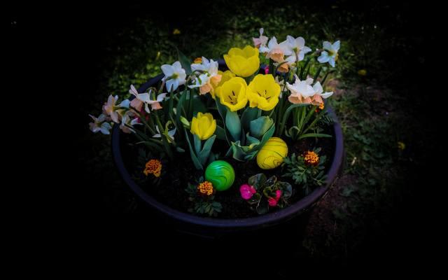 великдень, тюльпани, нарциси, чорний, фон, ЯЙЦЯ, квіти