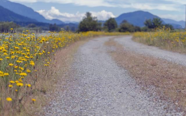 road, flowers