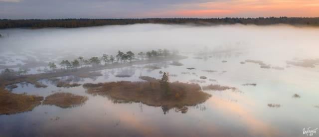 forest, swamp, fog, beautiful, photographer, Илья Гарбузов