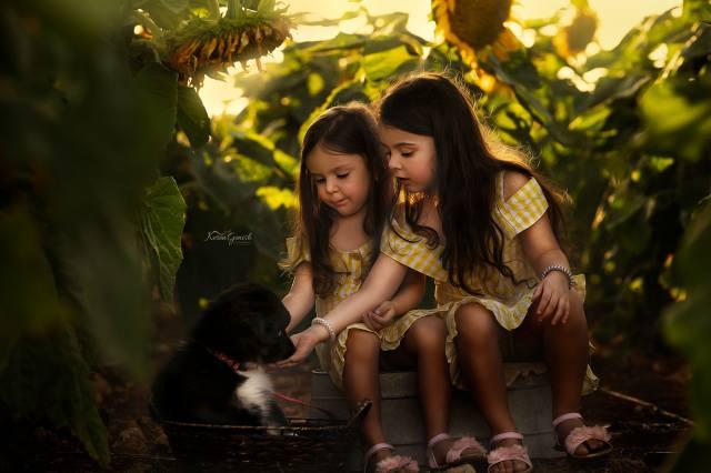 діти, дівчатка, природа, літо, соняшники, кошик, Тварина, собака, щенок