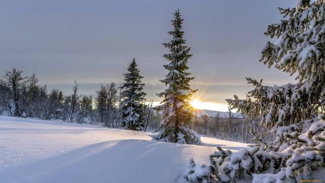 снег, деревья, сугробы, холодно