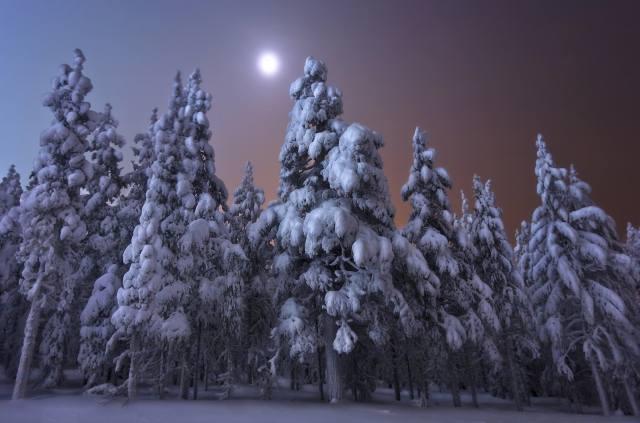 zima, les, sníh, stromy, krajina, noc, příroda, měsíc, jedli