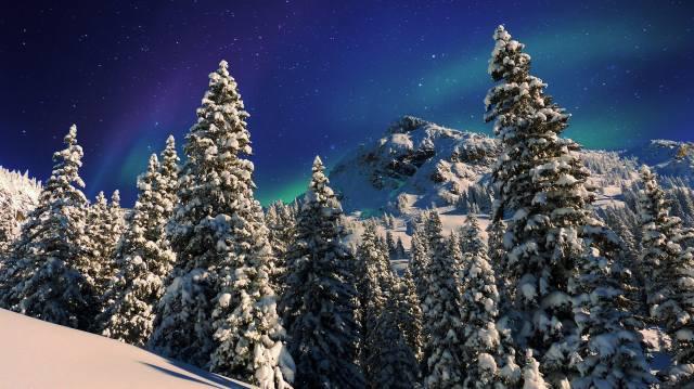 příroda, krajina, hory, stromy, jedli, les, svah, zima, sníh