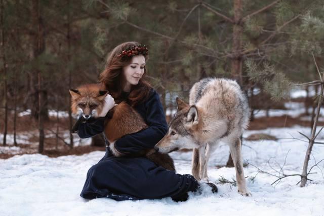 liška, vlk, zvířata