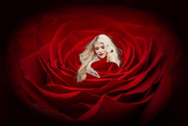 блондинка, роза, червона, фотоманіпуляція