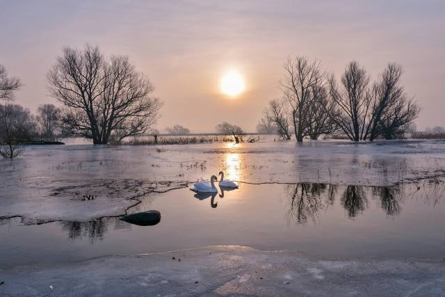 nature, landscape, winter, river, ice, snow, trees, birds of the world, birds