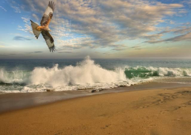 sea, surf, the sky, eagle