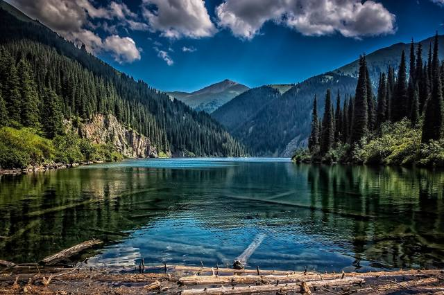 mountains, forest, the lake, logs