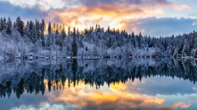 ліс, дерева, озеро, відображення, сніг, зима