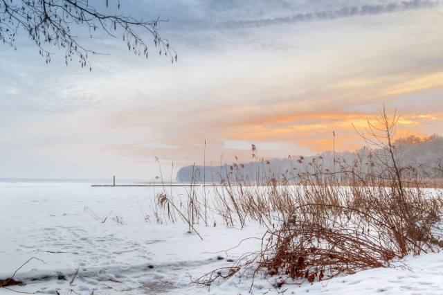 the lake, the reeds, snow, winter, nature, light
