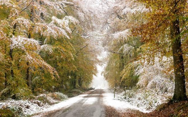 дорога, ліс, сніг