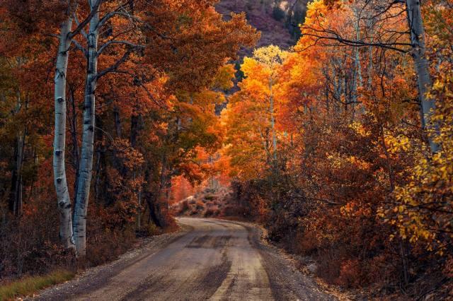 cesta, les, barvy