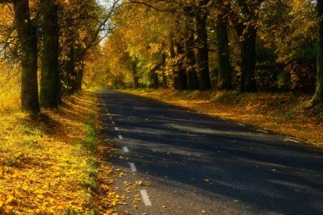 ліс, дорога, листя