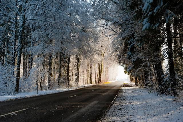 ліс, дорога, сніг