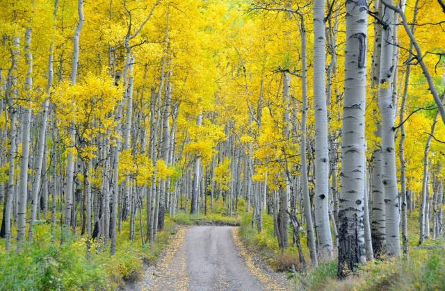 дорога, ліс, листя