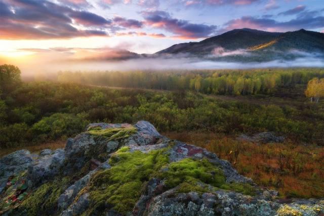 горы, лес, туман, красиво, фото, Павел Силиненко