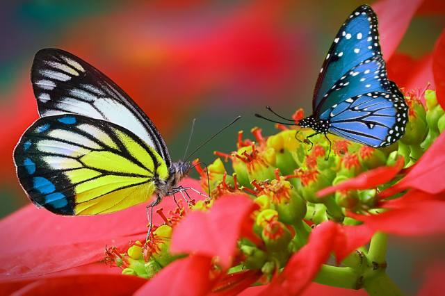 метелики, літо, квіти, яскраво