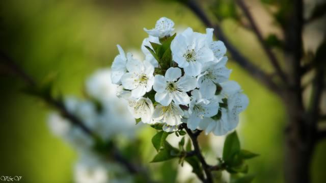 колір, красиво, весна