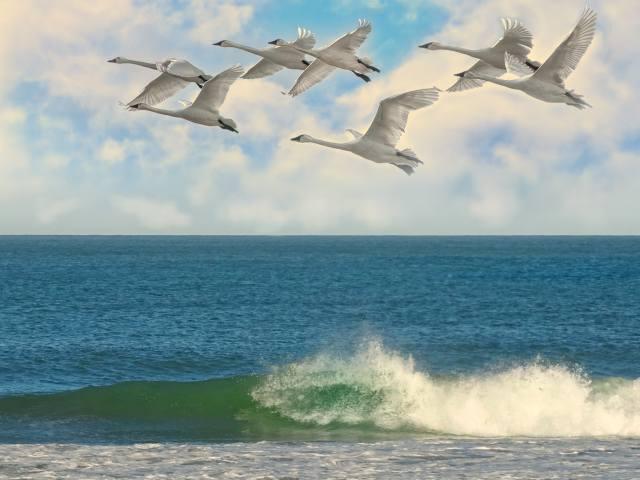море, прибій, небо, птахи