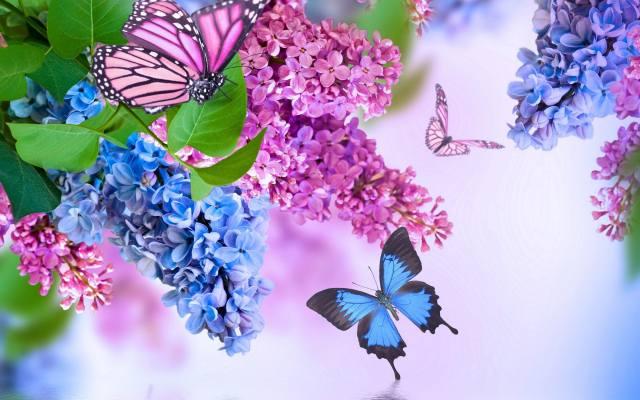 метелики, літають, близько, гілок, бузку
