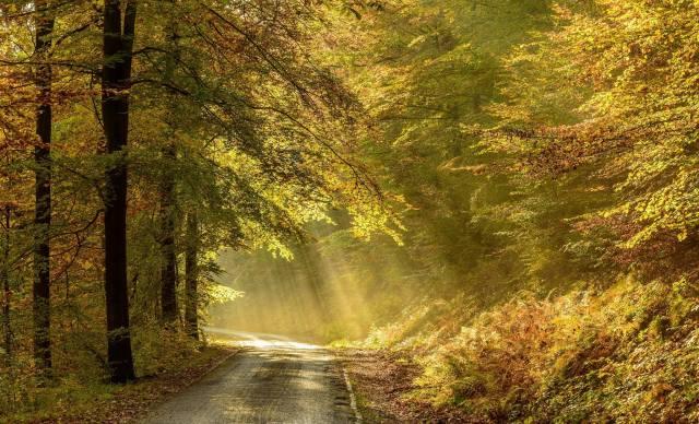 cesta, les, listy, světlo