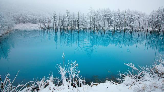 сніг, ліс, озеро