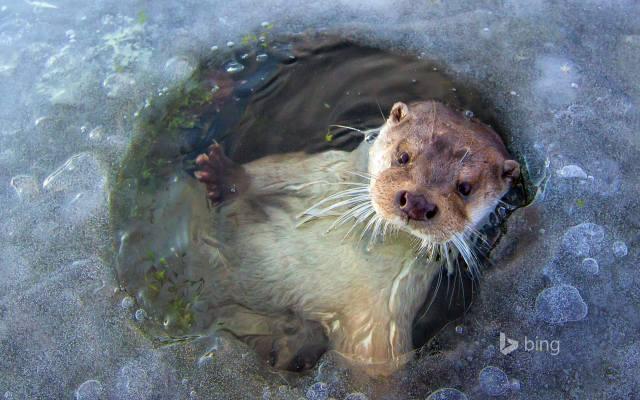 ice, прорубь, water, otter, bing