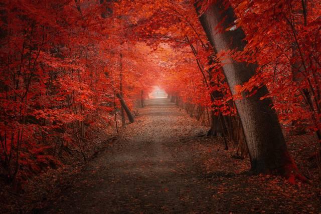 ліс, дорога, листя, колір