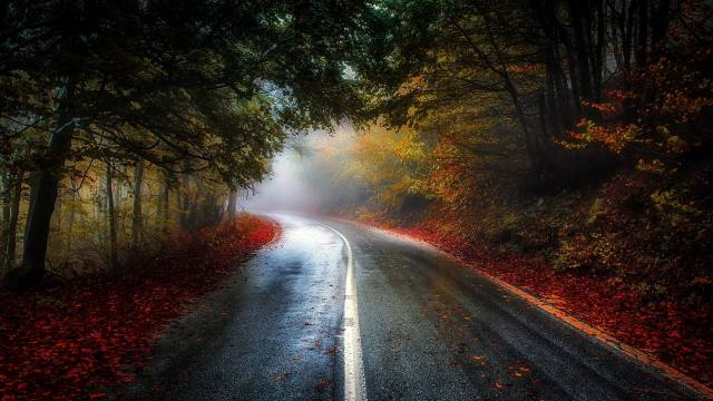forest, road, leaves