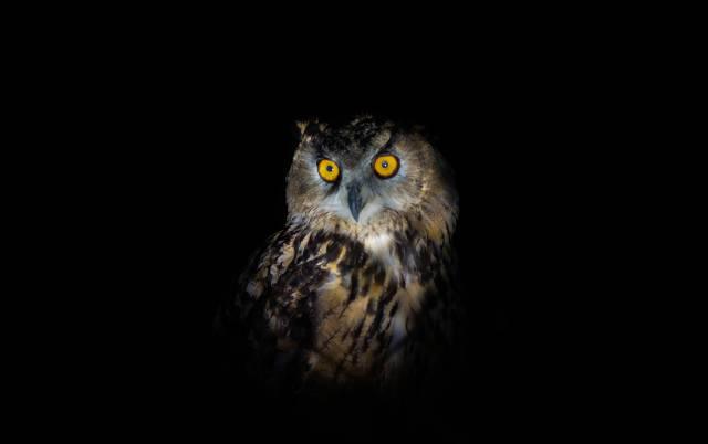 Owl, background, dark