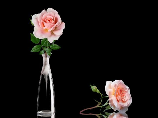 троянди, ваза, фон