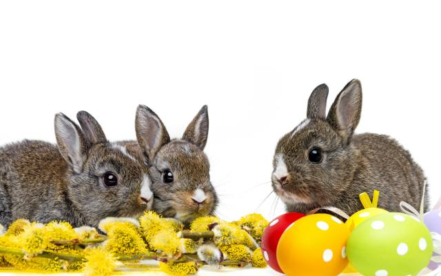 маленькі, сірі, кролики, з, веткой, верби, і, крашеными, яйцами