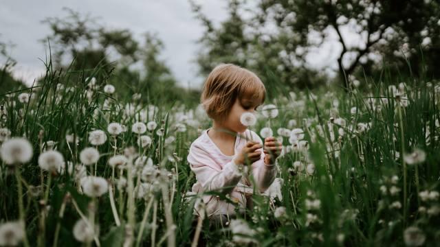 дитина, дівчинка, природа, літо, трава, одуванчики