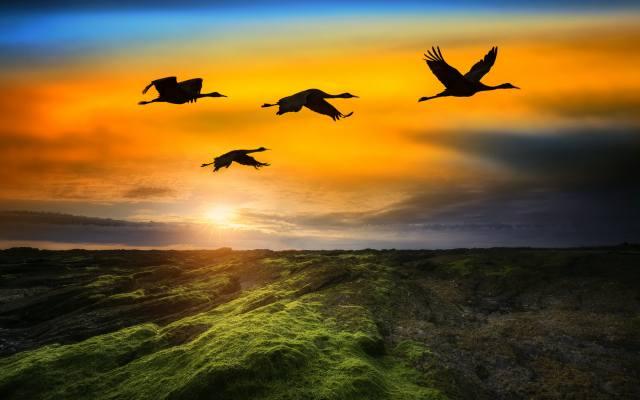 sunset, вечер птицы
