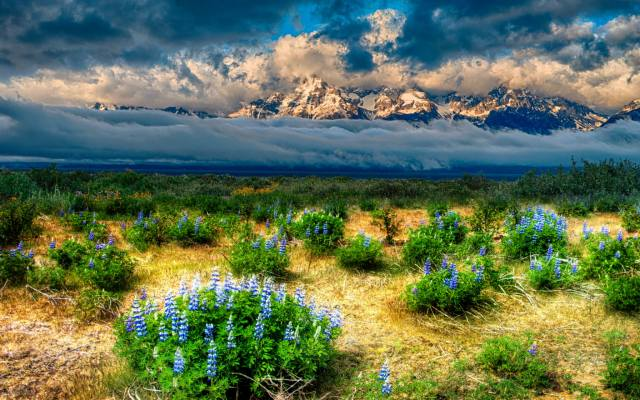 valley, flowers, grass, fog, mountains, the sky