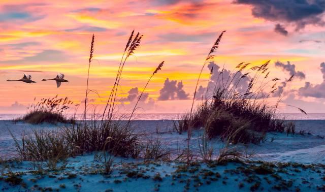 landscape, вечер лебеди, dawn, shore, the sky