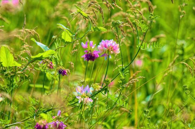 stems, summer, grass, flowers