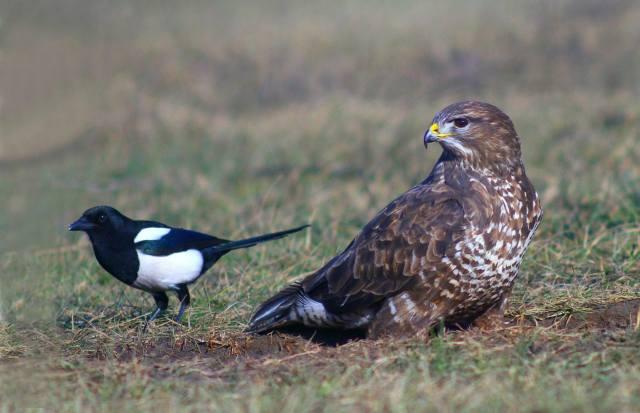птахи світу, природа